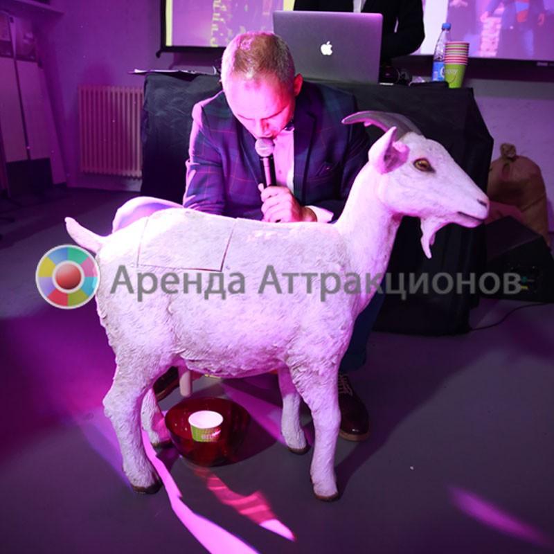 Участница мероприятия доит козу