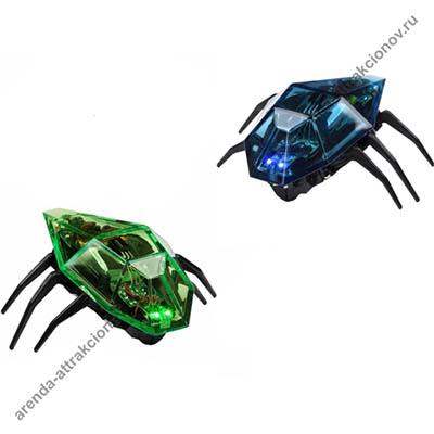 2 жука