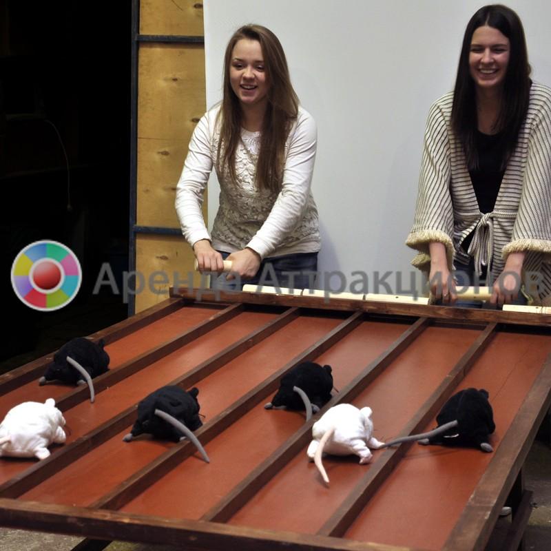 Мышиные бега в аренду на мероприятие