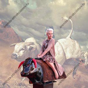 Заказать родео бык на мероприятие